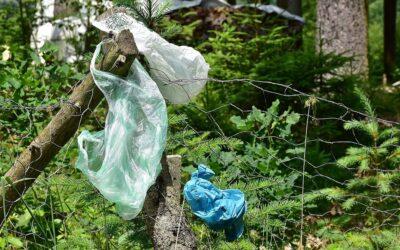 Kunststoff in der Umwelt: Kompendium für ein gemeinsames Grundverständnis