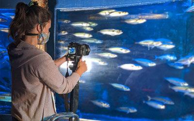 Umweltschutz: Fischkiemen als Vorbild für bionische Mikroplastikfilter